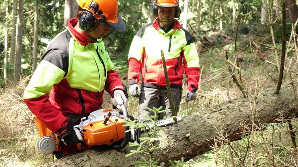 Auch in der Forstwirtschaft werden neue Leute gebraucht (Foto: Sachsnforst)